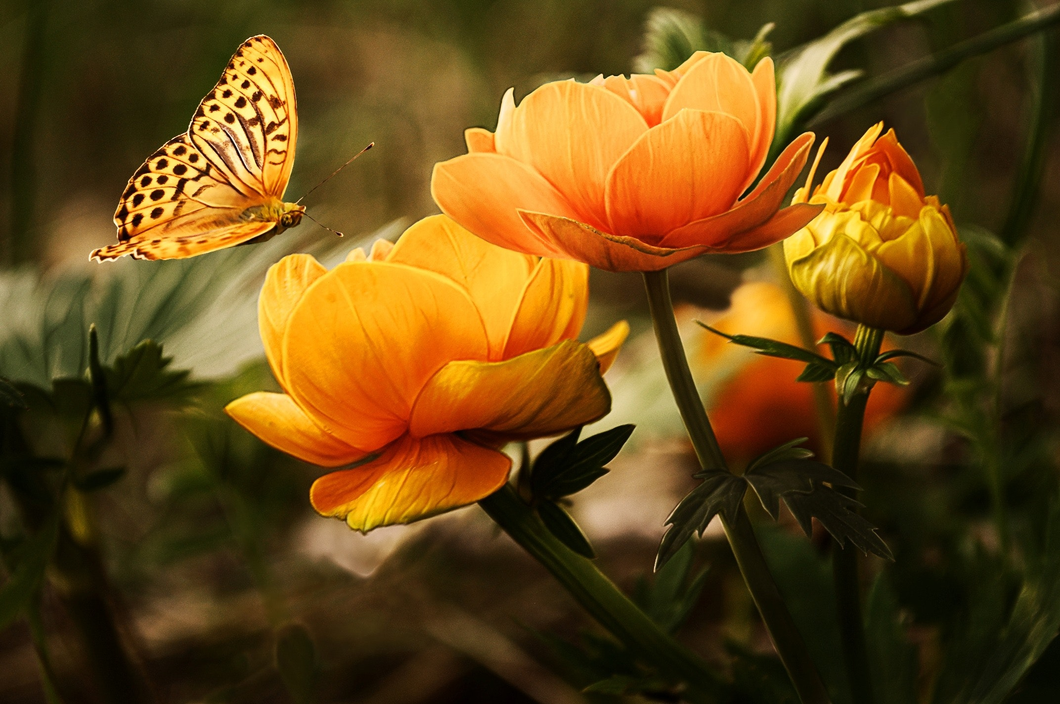 orange flower with butterfly 87452 - Blog